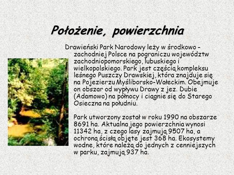 Położenie, powierzchnia Drawieński Park Narodowy leży w środkowo - zachodniej Polsce na pograniczu województw zachodniopomorskiego, lubuskiego i wielk