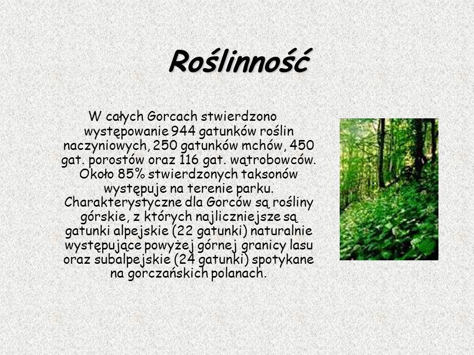 Roślinność W całych Gorcach stwierdzono występowanie 944 gatunków roślin naczyniowych, 250 gatunków mchów, 450 gat. porostów oraz 116 gat. wątrobowców