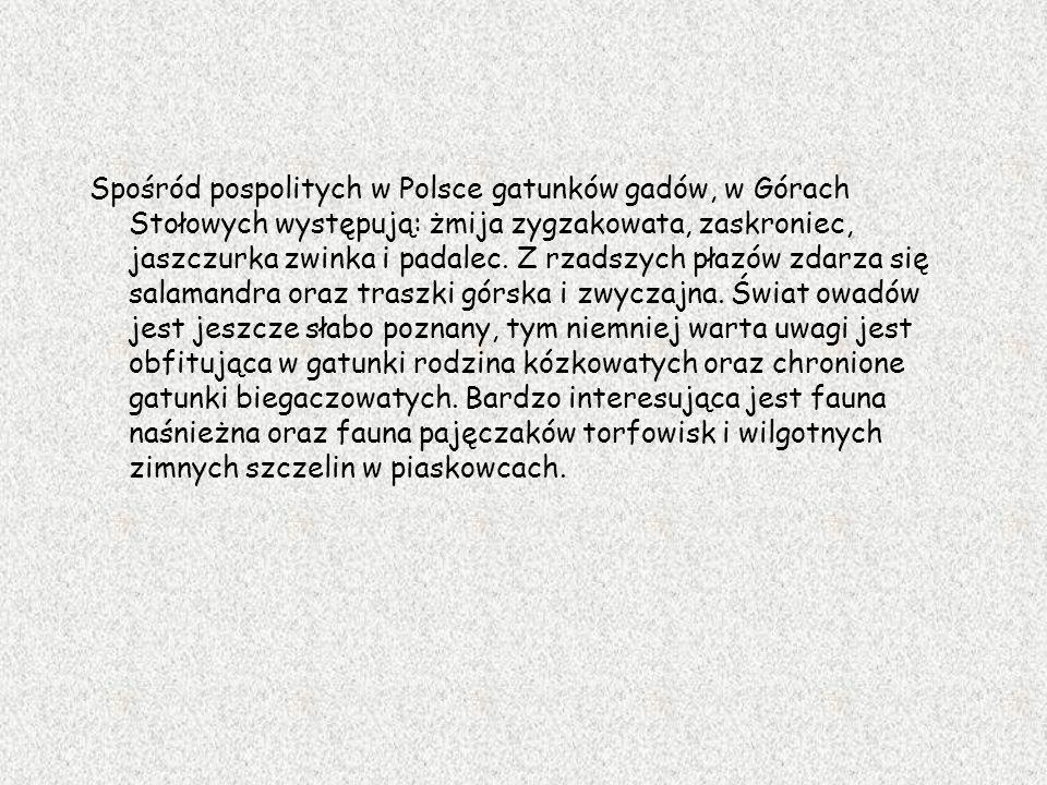 Spośród pospolitych w Polsce gatunków gadów, w Górach Stołowych występują: żmija zygzakowata, zaskroniec, jaszczurka zwinka i padalec. Z rzadszych pła