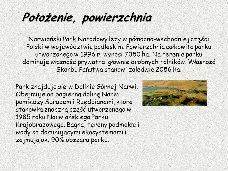 Park znajduje się w Dolinie Górnej Narwi. Obejmuje on bagienną dolinę Narwi pomiędzy Surażem i Rzędzianami, która stanowiła znaczną część utworzonego