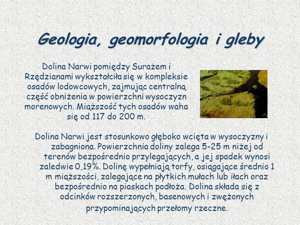 Geologia, geomorfologia i gleby Dolina Narwi jest stosunkowo głęboko wcięta w wysoczyzny i zabagniona. Powierzchnia doliny zalega 5-25 m niżej od tere