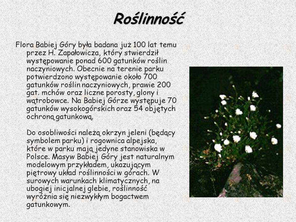 Roślinność Flora Babiej Góry była badana już 100 lat temu przez H. Zapałowicza, który stwierdził występowanie ponad 600 gatunków roślin naczyniowych.