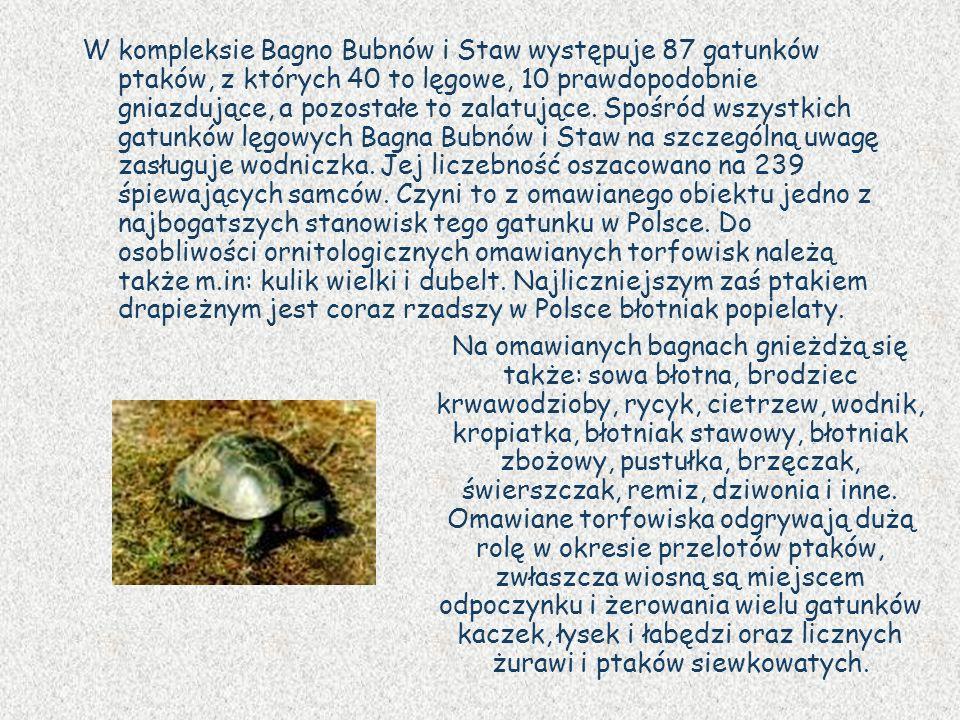 W kompleksie Bagno Bubnów i Staw występuje 87 gatunków ptaków, z których 40 to lęgowe, 10 prawdopodobnie gniazdujące, a pozostałe to zalatujące. Spośr