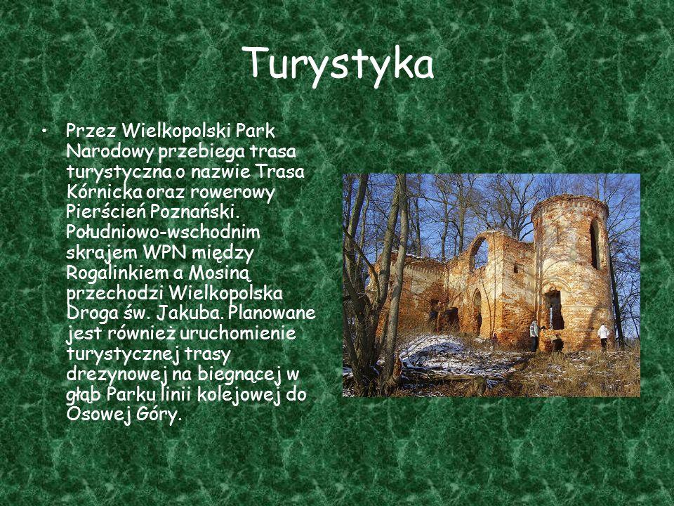 Turystyka Przez Wielkopolski Park Narodowy przebiega trasa turystyczna o nazwie Trasa Kórnicka oraz rowerowy Pierścień Poznański. Południowo-wschodnim