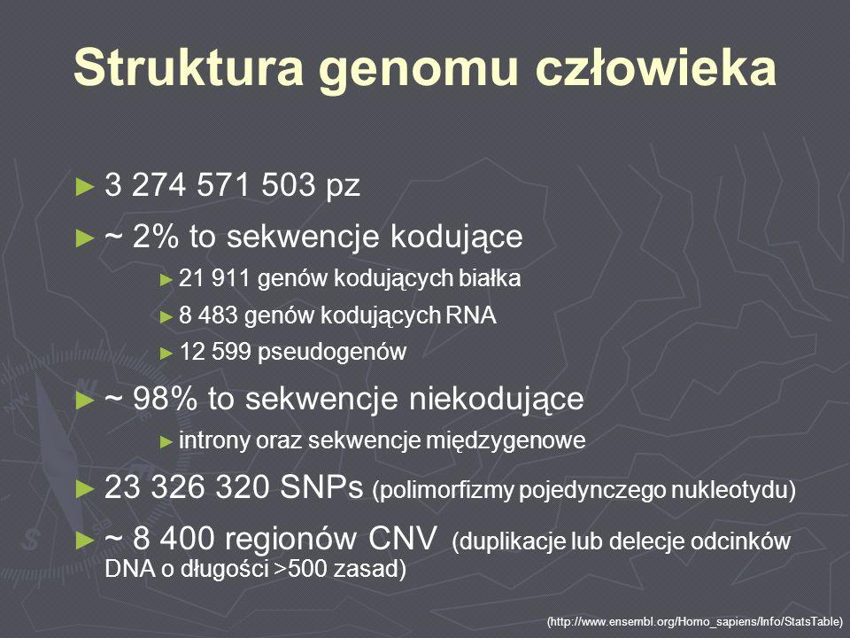 3 274 571 503 pz ~ 2% to sekwencje kodujące 21 911 genów kodujących białka 8 483 genów kodujących RNA 12 599 pseudogenów ~ 98% to sekwencje niekodując