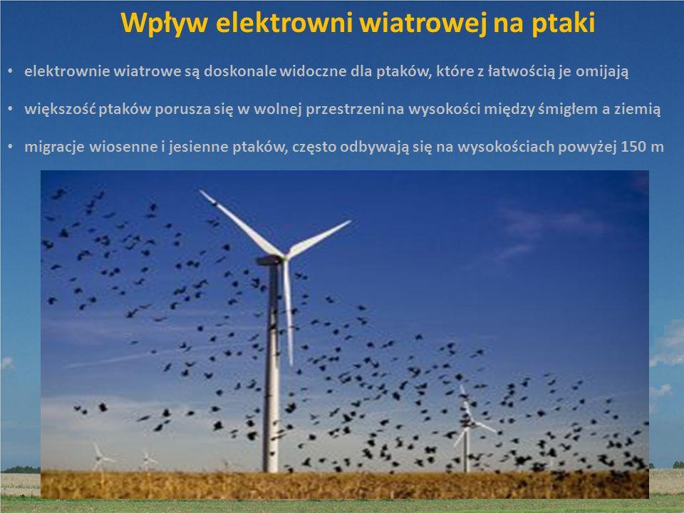 Wpływ elektrowni wiatrowej na ptaki większość ptaków porusza się w wolnej przestrzeni na wysokości między śmigłem a ziemią elektrownie wiatrowe są dos
