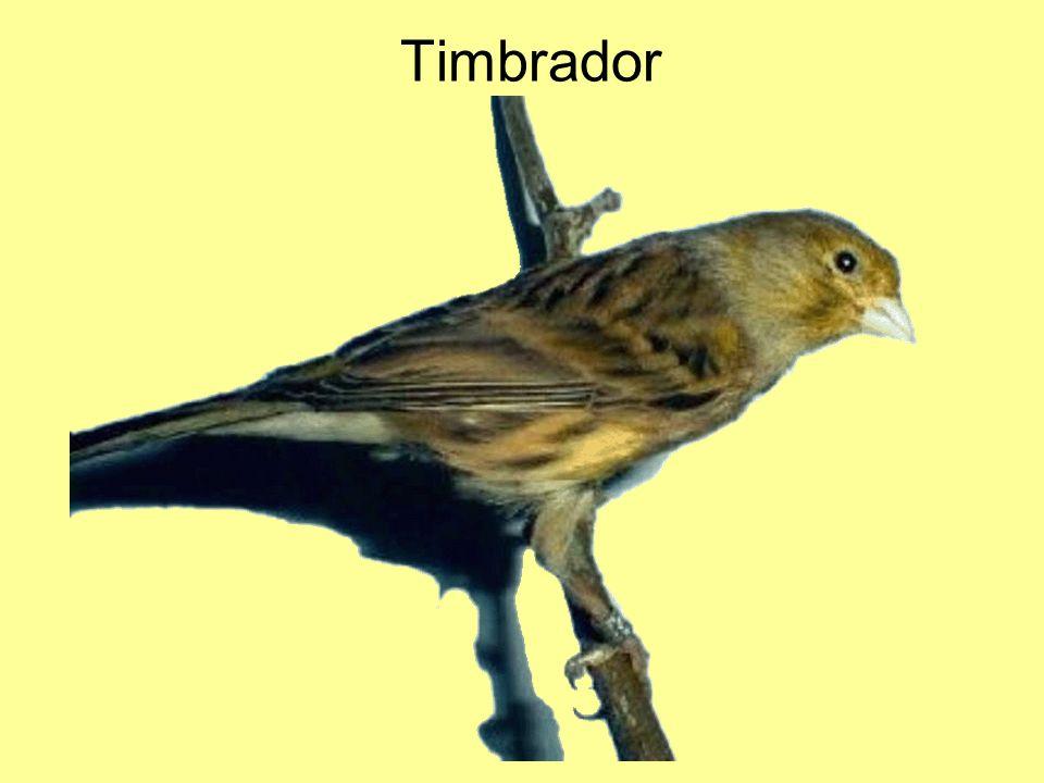 Timbrador