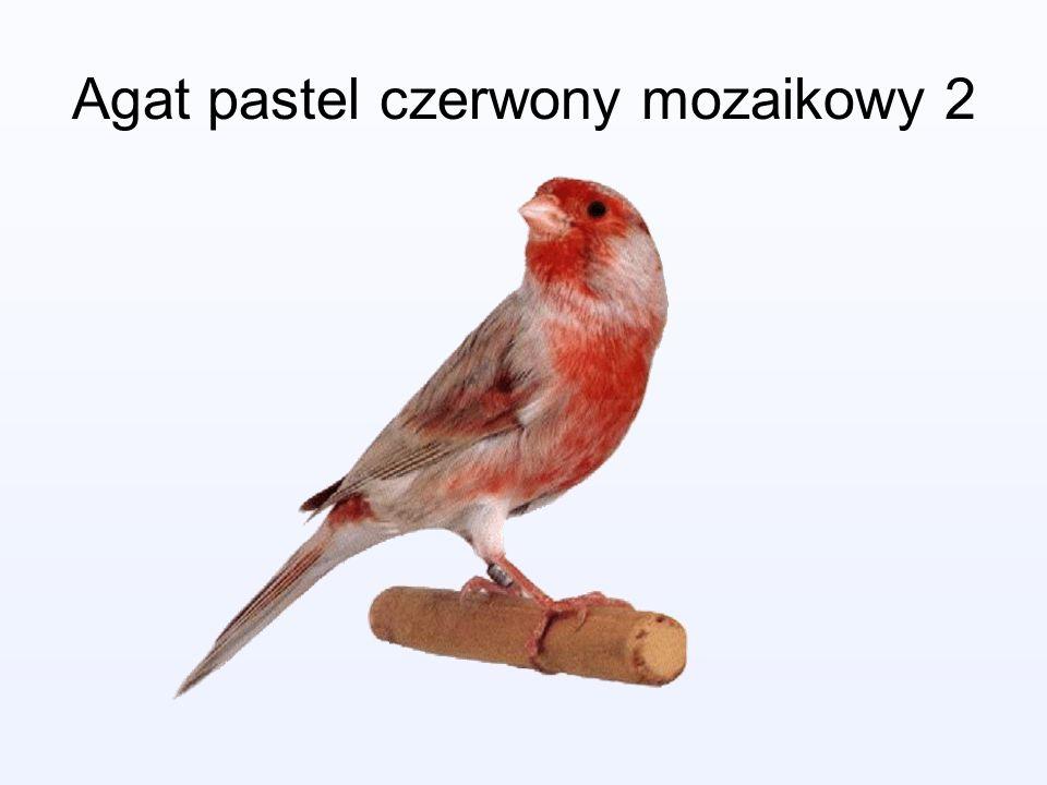 Agat pastel czerwony mozaikowy 2