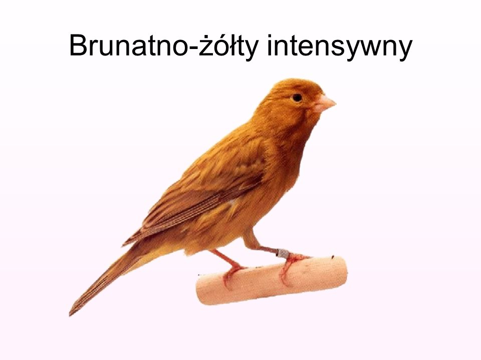 Brunatno-żółty intensywny