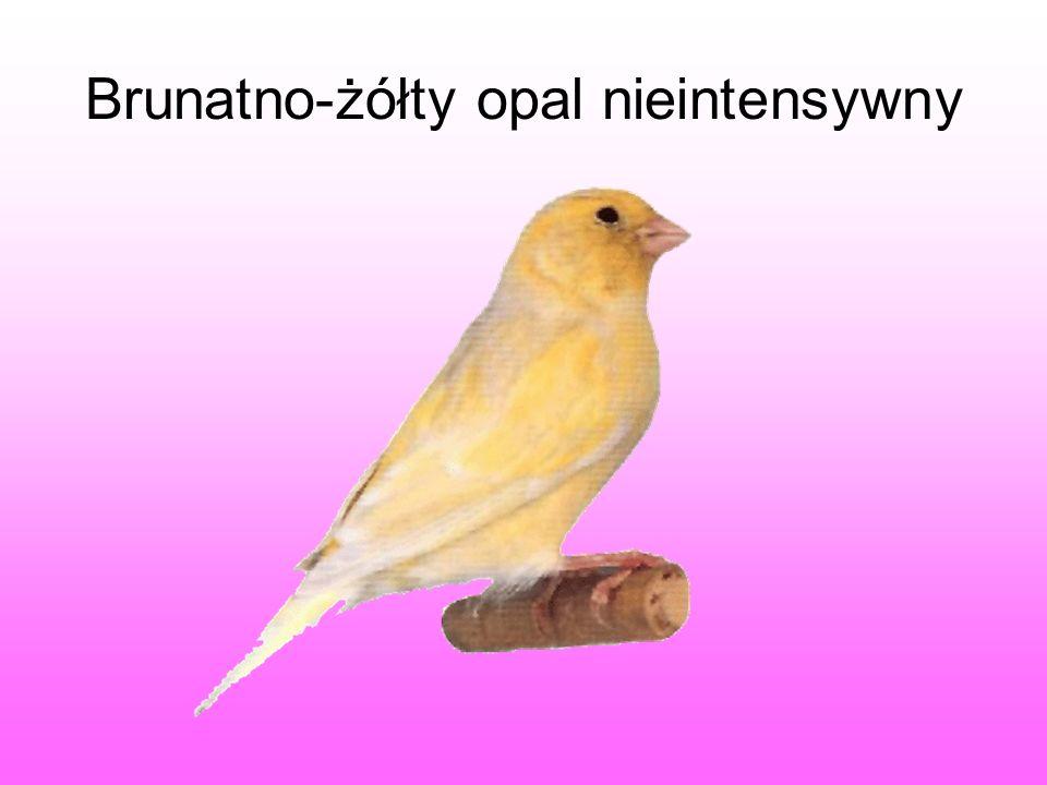 Brunatno-żółty opal nieintensywny