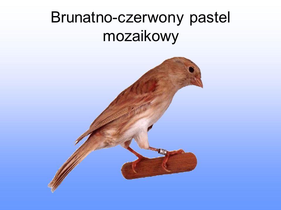 Brunatno-czerwony pastel mozaikowy