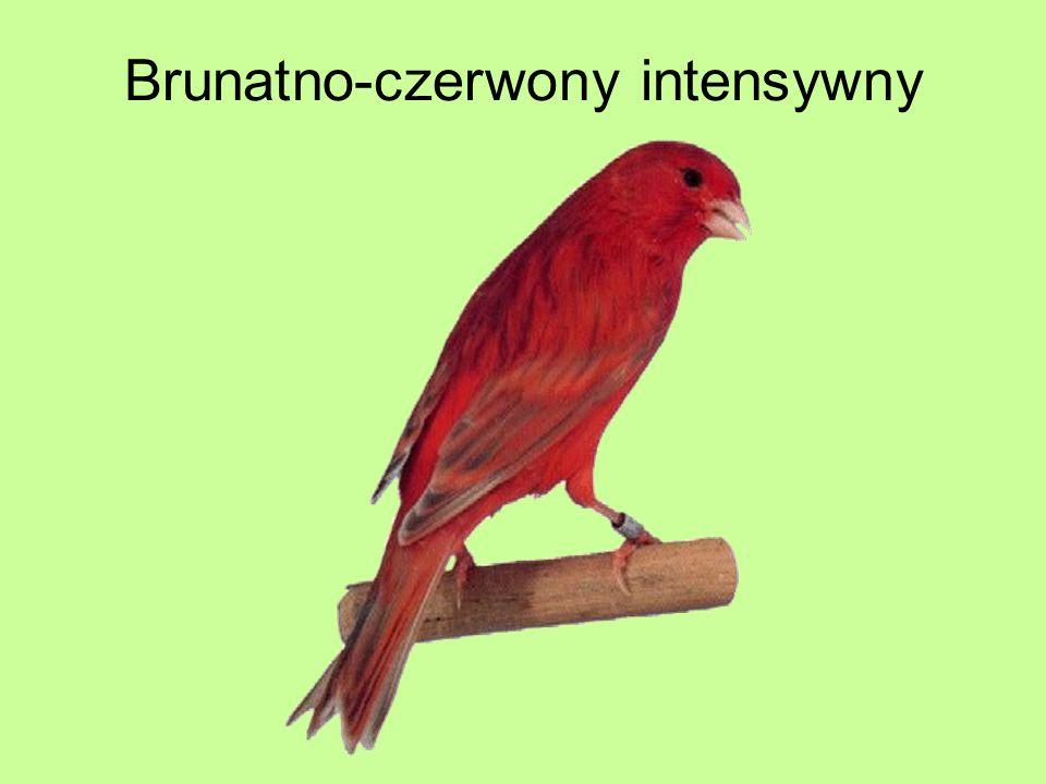 Brunatno-czerwony intensywny