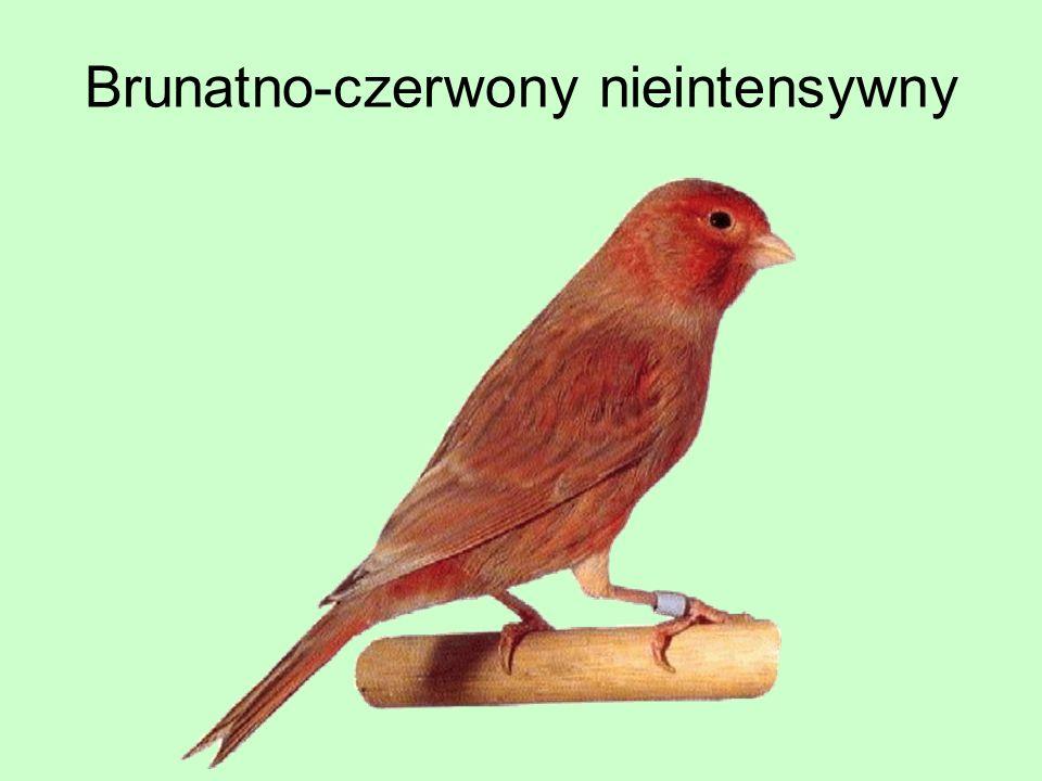 Brunatno-czerwony nieintensywny