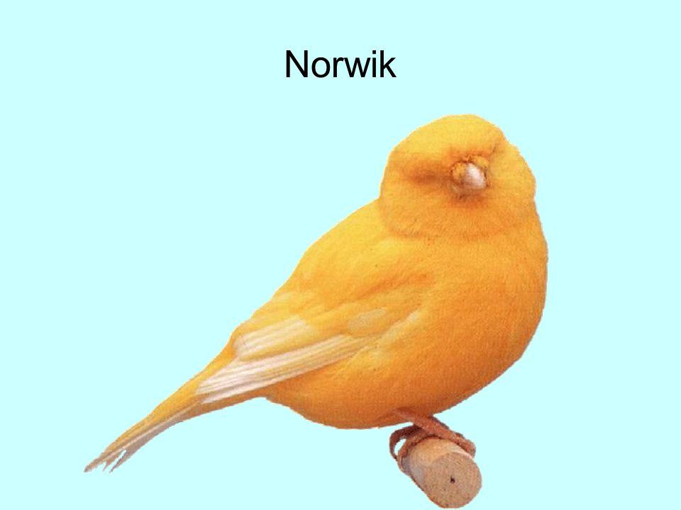 Norwik