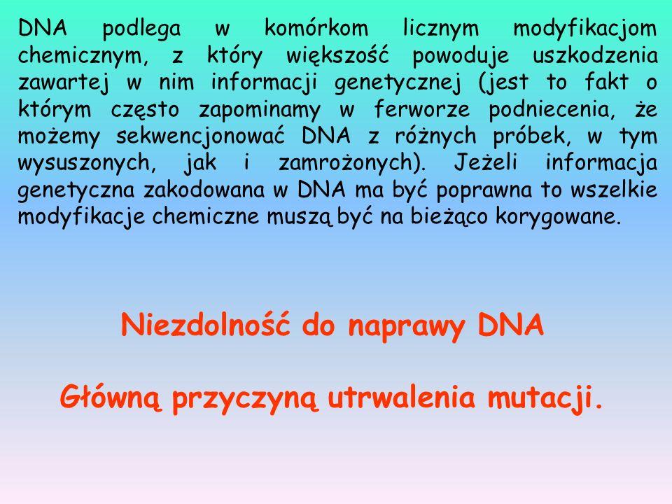 DNA podlega w komórkom licznym modyfikacjom chemicznym, z który większość powoduje uszkodzenia zawartej w nim informacji genetycznej (jest to fakt o k