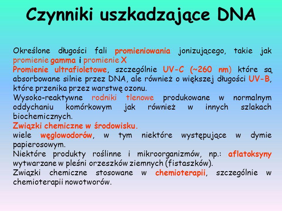 Czynniki uszkadzające DNA Określone długości fali promieniowania jonizującego, takie jak promienie gamma i promienie X Promienie ultrafioletowe, szcze