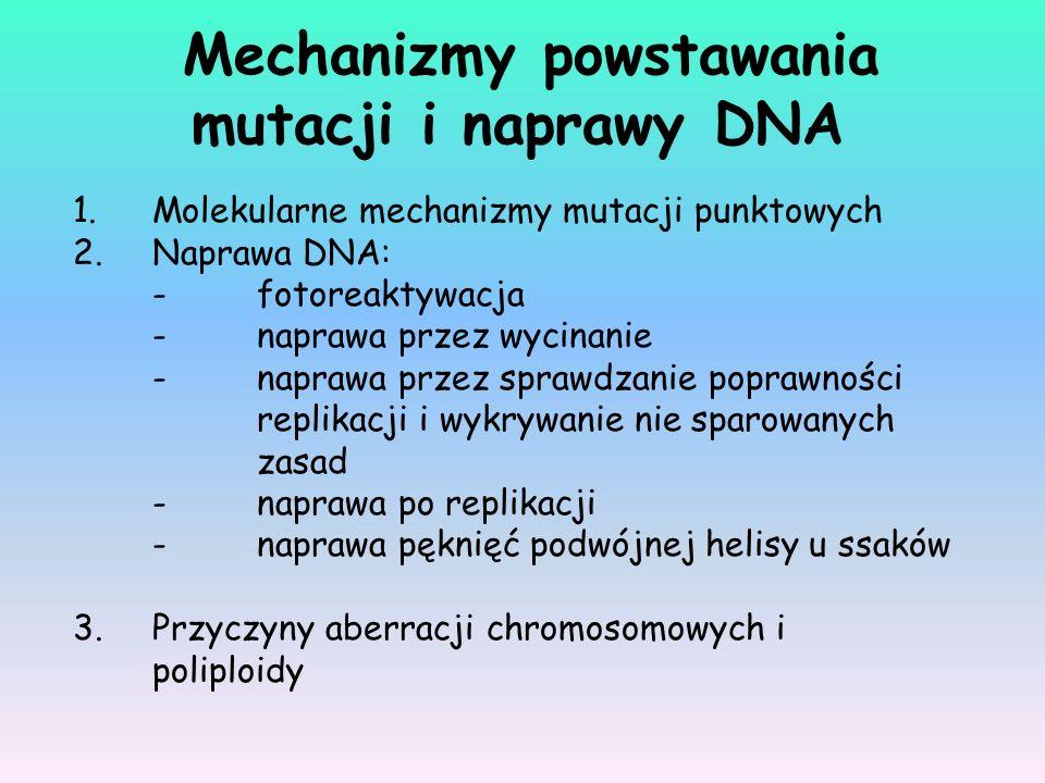 Mechanizmy powstawania mutacji i naprawy DNA 1.Molekularne mechanizmy mutacji punktowych 2.Naprawa DNA: -fotoreaktywacja -naprawa przez wycinanie -nap