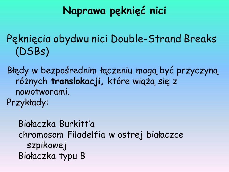 Pęknięcia obydwu nici Double-Strand Breaks (DSBs) Błędy w bezpośrednim łączeniu mogą być przyczyną różnych translokacji, które wiążą się z nowotworami