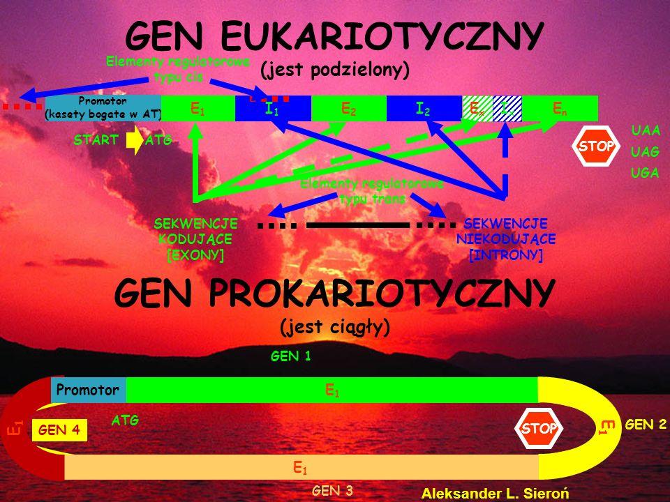 Promotor (kasety bogate w AT) E1E1 I1I1 E2E2 I2I2 EnEn ExEx IxIx GEN EUKARIOTYCZNY (jest podzielony) GEN PROKARIOTYCZNY (jest ciągły) E1E1 ATG SEKWENC