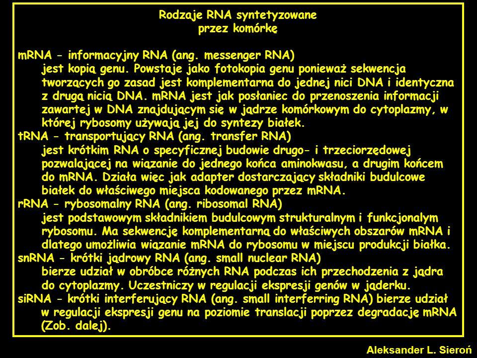 Rodzaje RNA syntetyzowane przez komórkę mRNA - informacyjny RNA (ang. messenger RNA) jest kopią genu. Powstaje jako fotokopia genu ponieważ sekwencja
