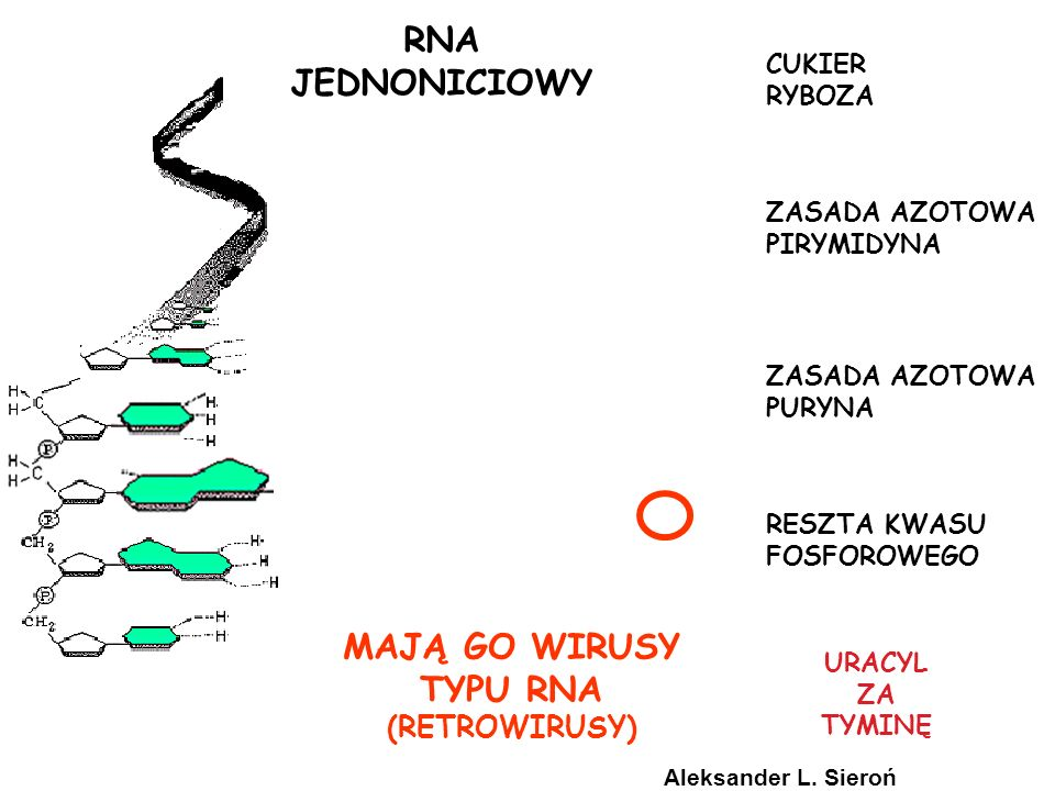 pakowanie, metylacja, rearanżacje, amplifikacje, heterochromatyna, inaktywacja-X, reorganizacja DNA TRANSKRYPT RNA FUNKCJONALNY RNA promotory, wzmacniacze, czynniki transkrypcji, białka wiążące, represory kapowanie, ogon poli-A, składanie, zmienne składanie JĄDRO CYTOZOL DNA