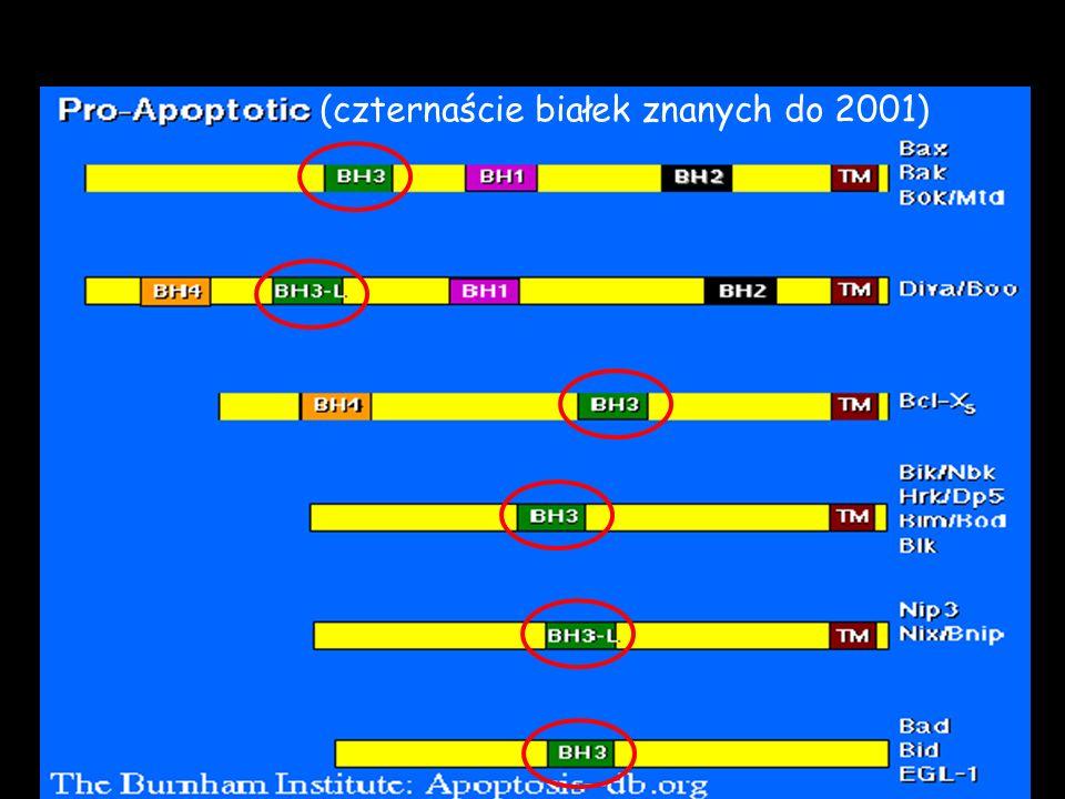 Wzbudzają apoptozę (czternaście białek znanych do 2001)
