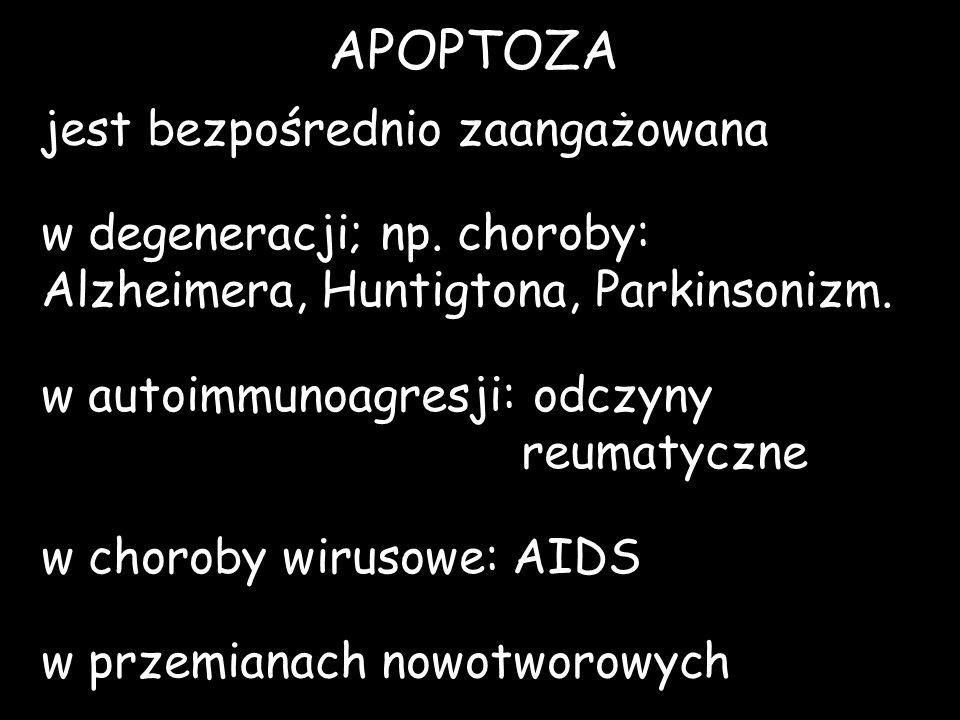 APOPTOZA jest bezpośrednio zaangażowana w degeneracji; np. choroby: Alzheimera, Huntigtona, Parkinsonizm. w autoimmunoagresji: odczyny reumatyczne w c