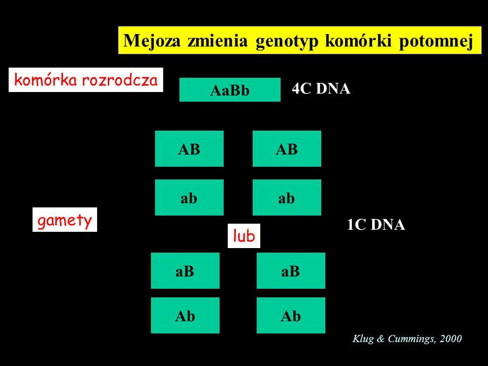 Nondysjunkcja chromosomów w mejozie Pierwszy podział Drugi podział