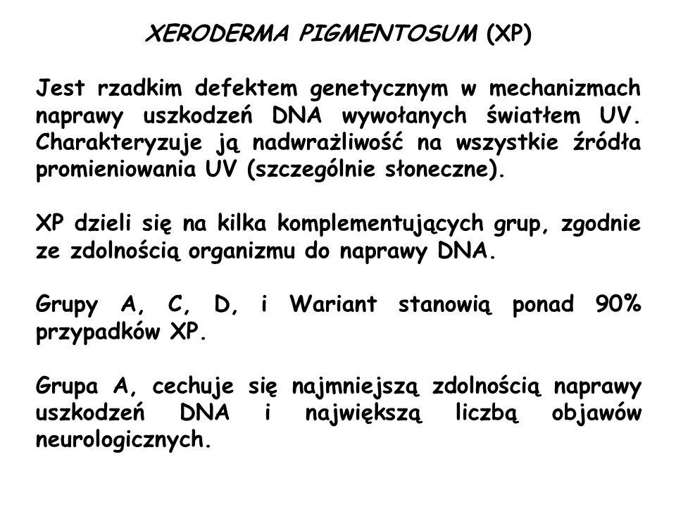 XERODERMA PIGMENTOSUM (XP) Jest rzadkim defektem genetycznym w mechanizmach naprawy uszkodzeń DNA wywołanych światłem UV. Charakteryzuje ją nadwrażliw