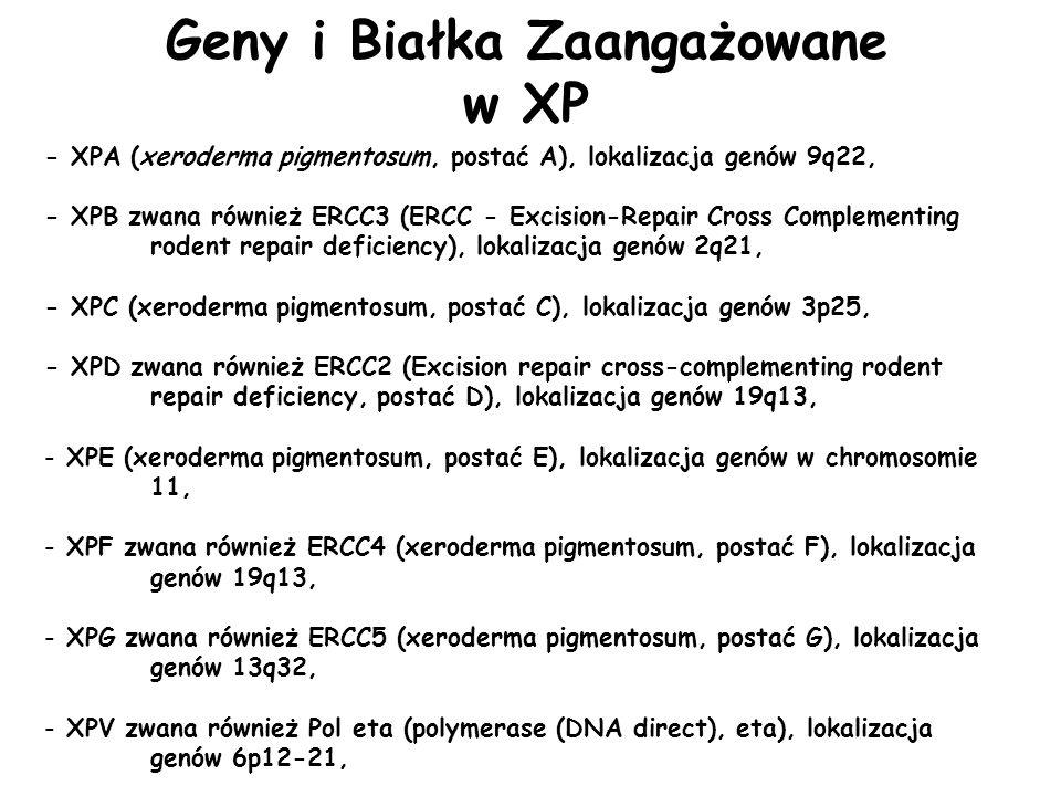 - XPA (xeroderma pigmentosum, postać A), lokalizacja genów 9q22, - XPB zwana również ERCC3 (ERCC - Excision-Repair Cross Complementing rodent repair d