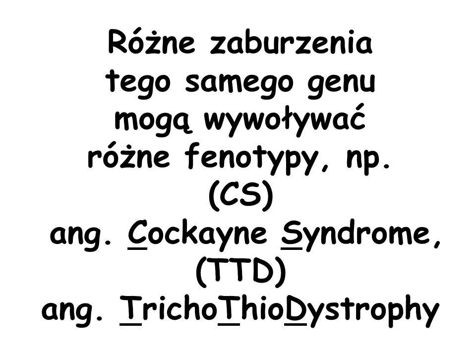 Różne zaburzenia tego samego genu mogą wywoływać różne fenotypy, np. (CS) ang. Cockayne Syndrome, (TTD) ang. TrichoThioDystrophy