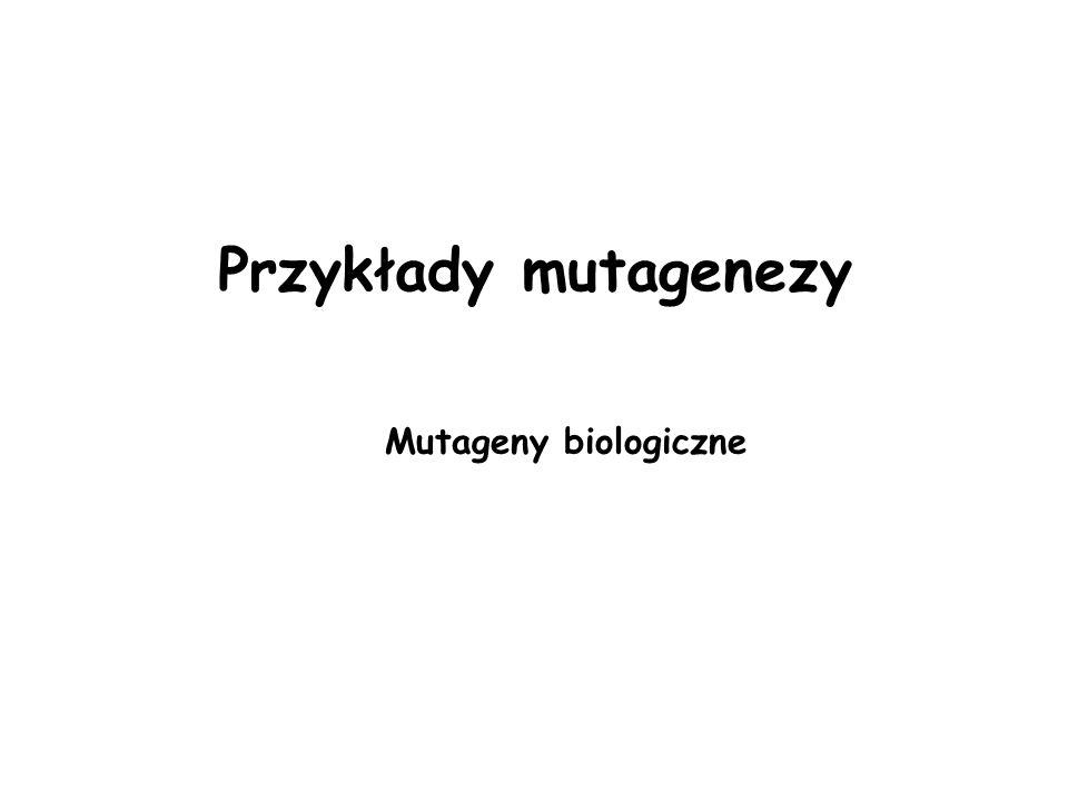 Mutageny biologiczne Przykłady mutagenezy