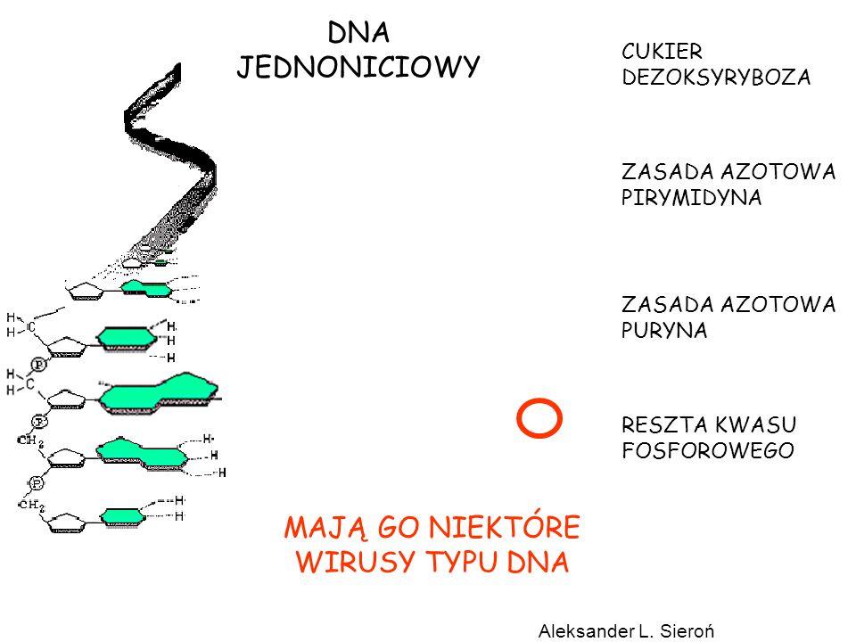 nieaktywny aktywny MITOZA (M) G2 http://www.sb-roscoff.fr/CyCell/Diapo/sld003.htm Przejście profaza/metafaza: Uszkodzenie DNA zatrzymuje komórki w profazie przez wpływ na aktywność cdc25