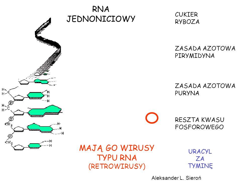 DNA może kształtować siebie na różne sposoby aby osiągnąć własne cele w życiu.