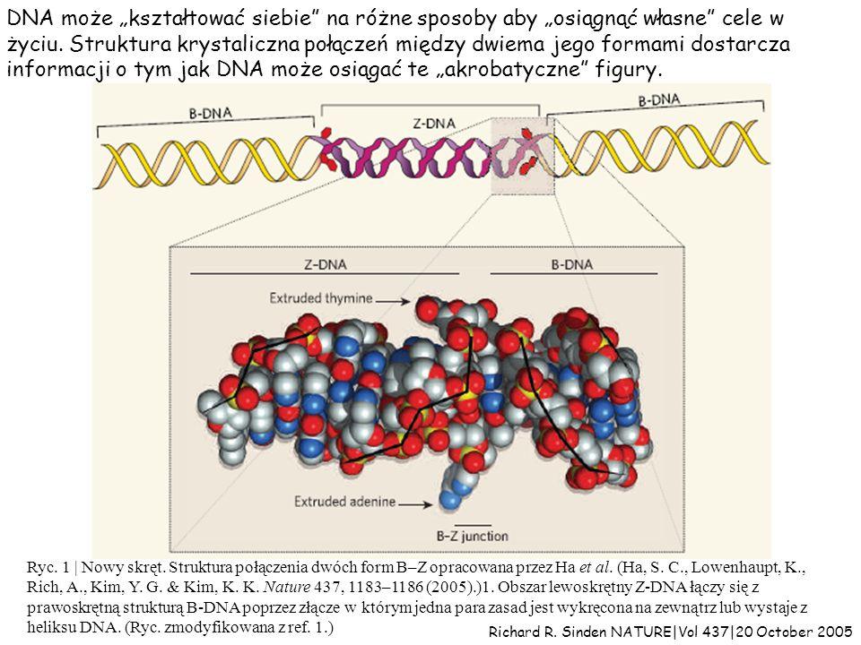 histony 2x [H2A, H2B, H3 i H4] (niebieskie i zielone) H1 (żółty) Upakowanie DNA w nukleosomie DNA 146 pz DNA między nukleosomami około 60 pz