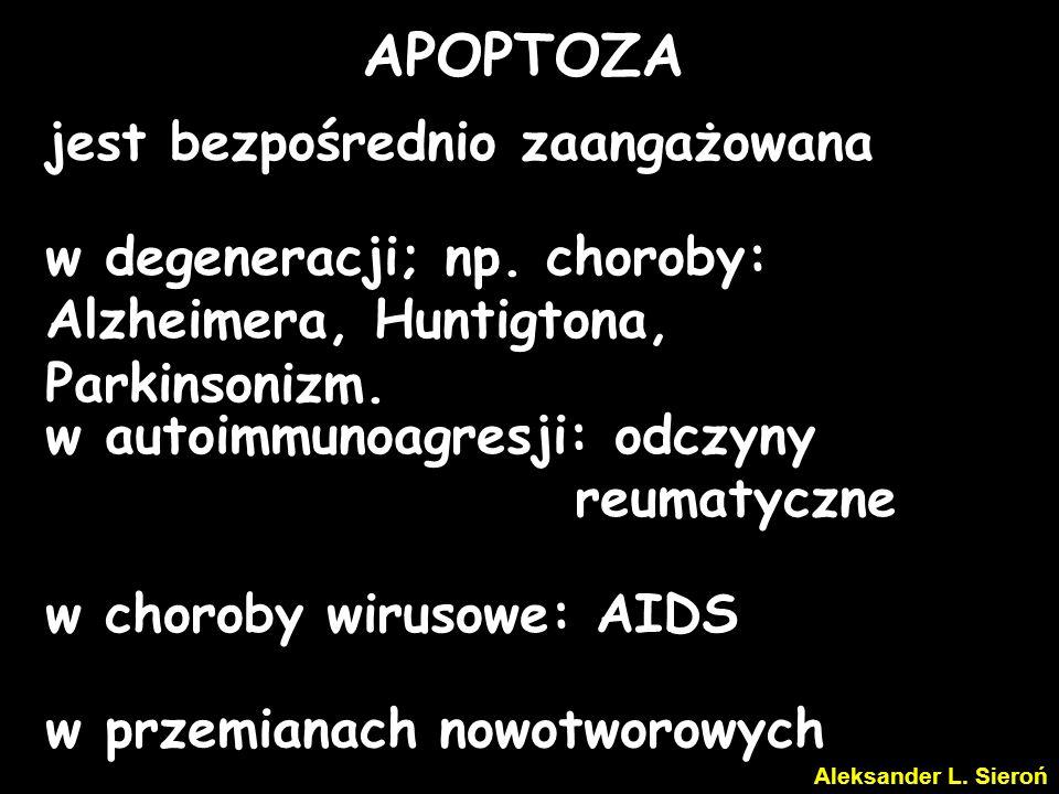 S T A R T Apoptoza zaczyna się w komórkach nie dających się naprawić, lub które zakończyły swoją zaprogramowaną funkcję biologiczną.