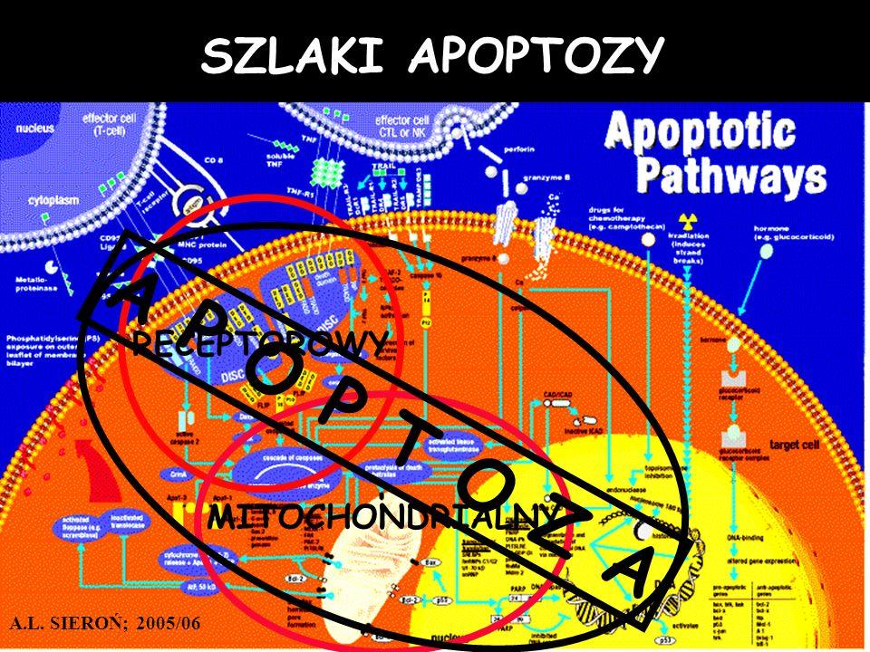 SZLAKI APOPTOZY RECEPTOROWY MITOCHONDRIALNY A P O P T O Z A A.L. SIEROŃ; 2005/06