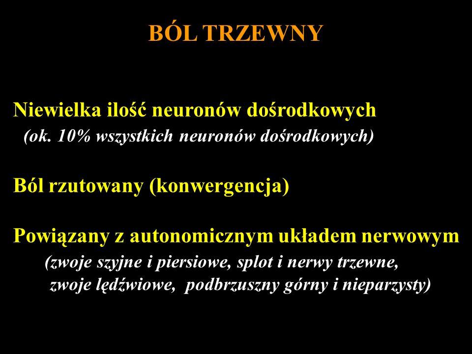 BÓL TRZEWNY Niewielka ilość neuronów dośrodkowych (ok. 10% wszystkich neuronów dośrodkowych) Ból rzutowany (konwergencja) Powiązany z autonomicznym uk