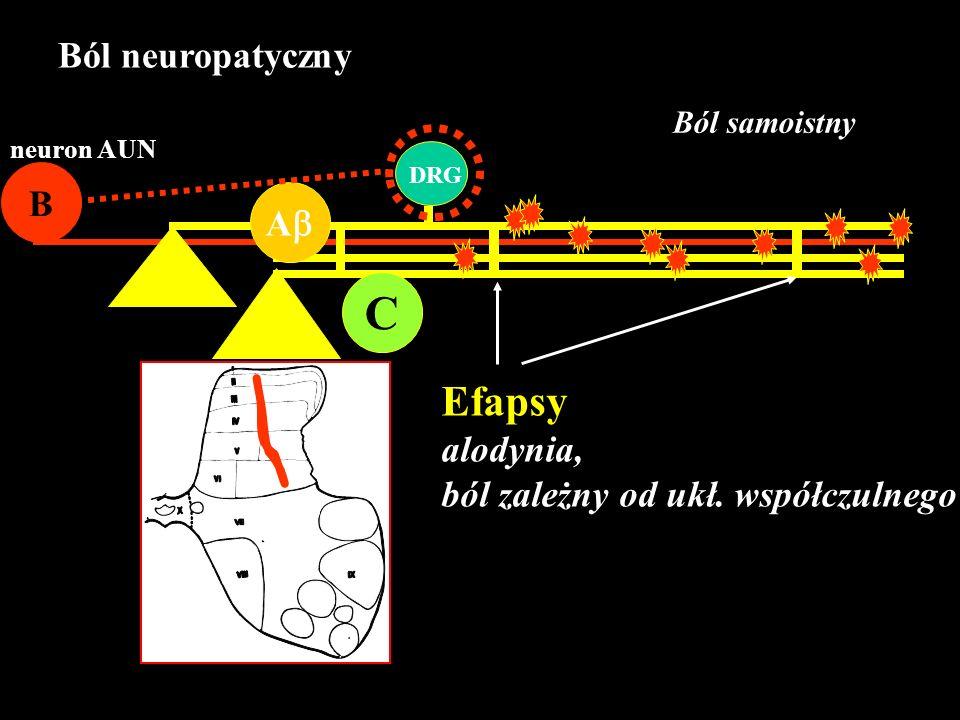 C A B neuron AUN DRG Ból samoistny Efapsy alodynia, ból zależny od ukł. współczulnego Ból neuropatyczny
