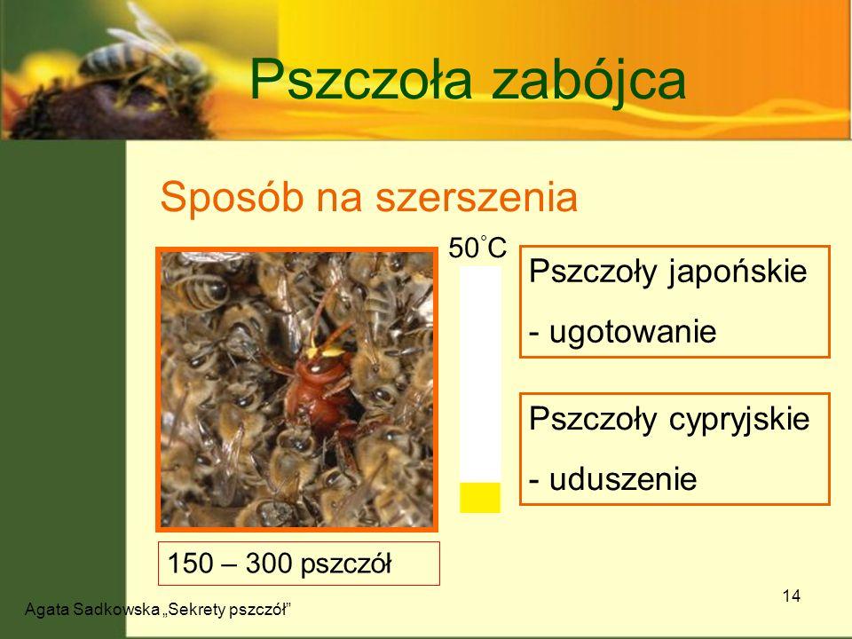 Agata Sadkowska Sekrety pszczół 14 Pszczoła zabójca Sposób na szerszenia Pszczoły japońskie - ugotowanie Pszczoły cypryjskie - uduszenie 150 – 300 psz