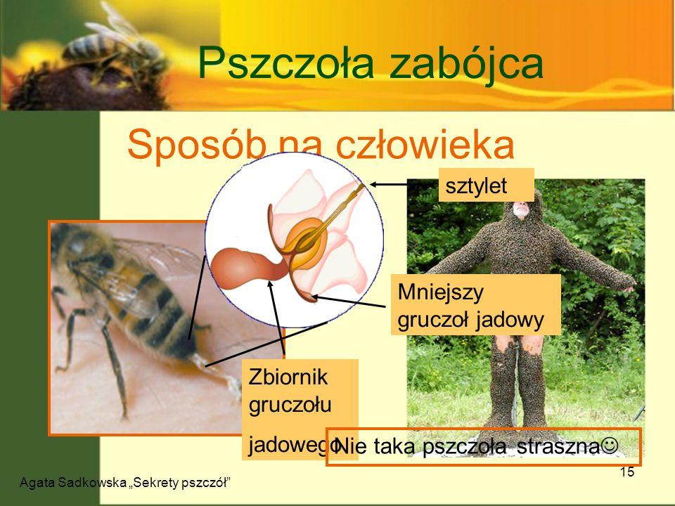 Agata Sadkowska Sekrety pszczół 15 Pszczoła zabójca Sposób na człowieka Zbiornik gruczołu jadowego Mniejszy gruczoł jadowy sztylet Nie taka pszczoła s