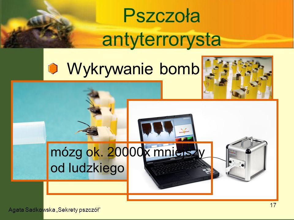 Agata Sadkowska Sekrety pszczół 17 Wykrywanie bomb Rozpoznawanie twarzy Pszczoła antyterrorysta mózg ok. 20000x mniejszy od ludzkiego