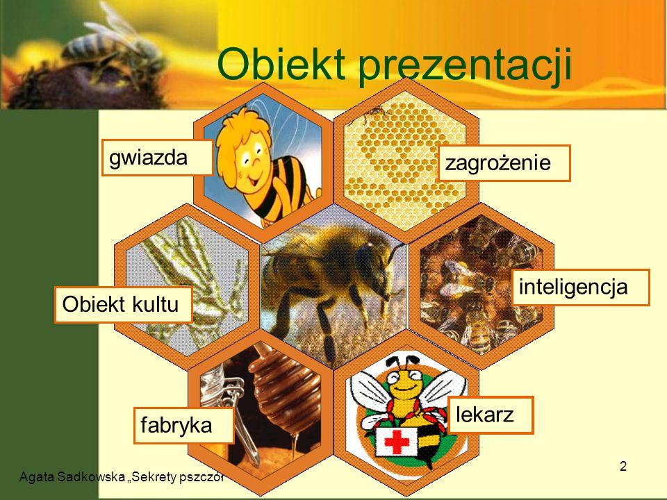 Agata Sadkowska Sekrety pszczół 13 Pszczeli taniec Kierunek Położenie jedzenia względem słońca Kierunek zależny od pory dnia