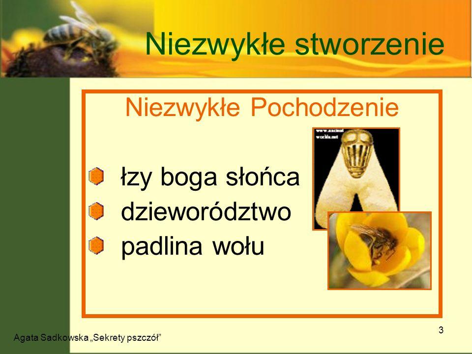 Agata Sadkowska Sekrety pszczół 14 Pszczoła zabójca Sposób na szerszenia Pszczoły japońskie - ugotowanie Pszczoły cypryjskie - uduszenie 150 – 300 pszczół 50 ° C