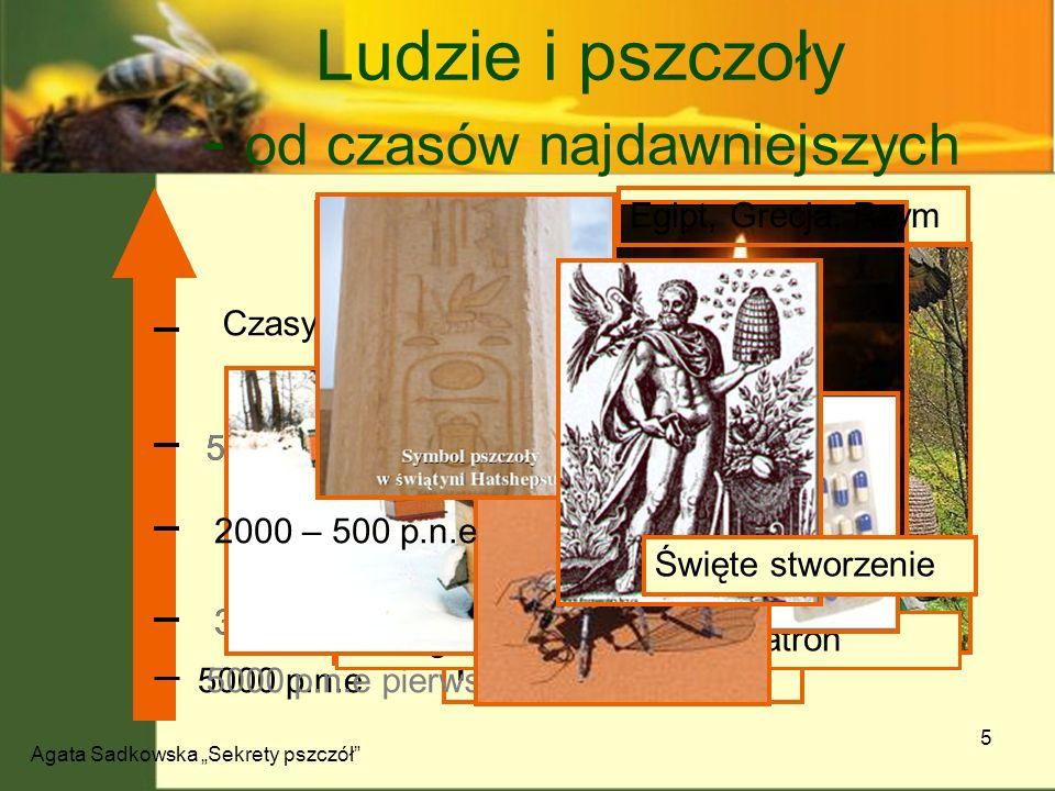 Agata Sadkowska Sekrety pszczół 5 Ludzie i pszczoły - od czasów najdawniejszych Pierwsze ślady 5000 p.n.e 5000 p.n.e pierwsze ślady 3000 p.n.e Pierwsz