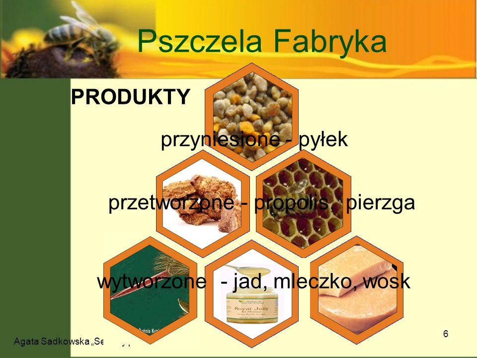 Agata Sadkowska Sekrety pszczół 6 Pszczela Fabryka przyniesione - pyłek przetworzone - propolis, pierzga wytworzone - jad, mleczko, wosk PRODUKTY