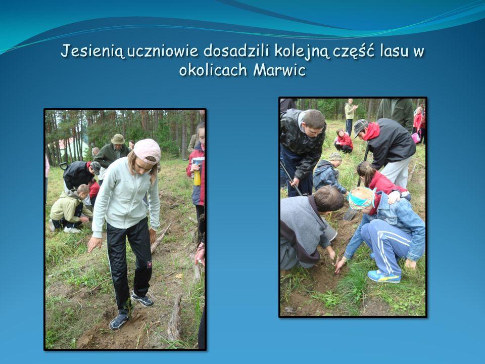 Jesienią uczniowie dosadzili kolejną część lasu w okolicach Marwic