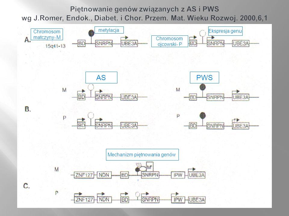 Chromosom matczyny- M Chromosom ojcowski- P metylacja Ekspresja genu ASPWS Mechanizm piętnowania genów