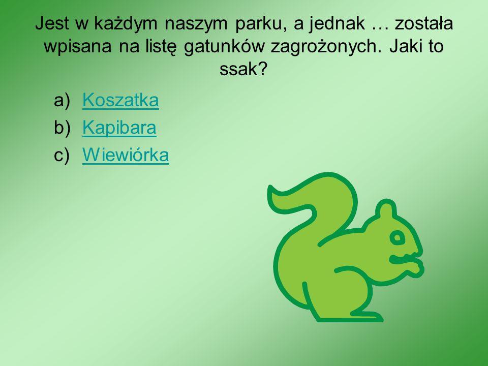Jest w każdym naszym parku, a jednak … została wpisana na listę gatunków zagrożonych. Jaki to ssak? a)KoszatkaKoszatka b)KapibaraKapibara c)WiewiórkaW