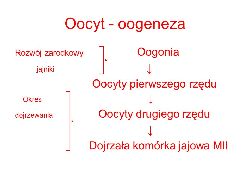 Oocyt - oogeneza Rozwój zarodkowy Oogonia jajniki Oocyty pierwszego rzędu Okres dojrzewania Oocyty drugiego rzędu Dojrzała komórka jajowa MII
